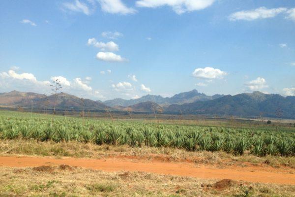 Tanzania12viaggio_15